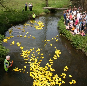 Duck Race Image (1)